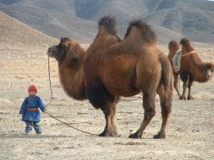 In the remote Gobi ... 2006
